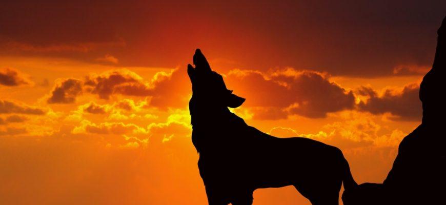 Статусы «Волки»
