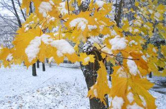 статусы про первый снег