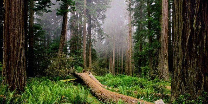 статусы про лес