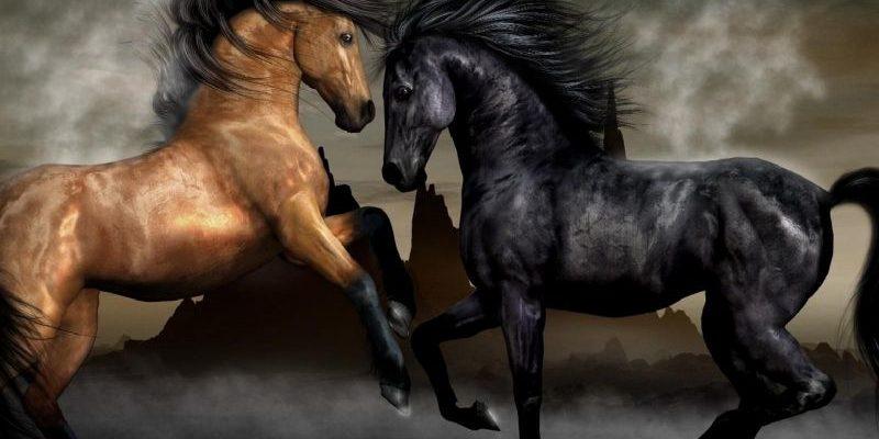 статусы со смыслом про лошадей