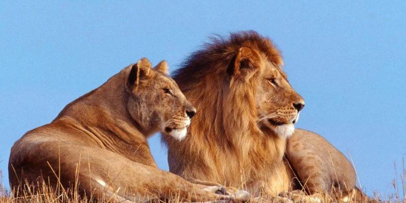 статусы со смыслом про львов