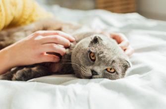 Статусы про котов и людей