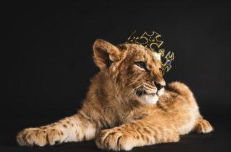 Статусы для царей