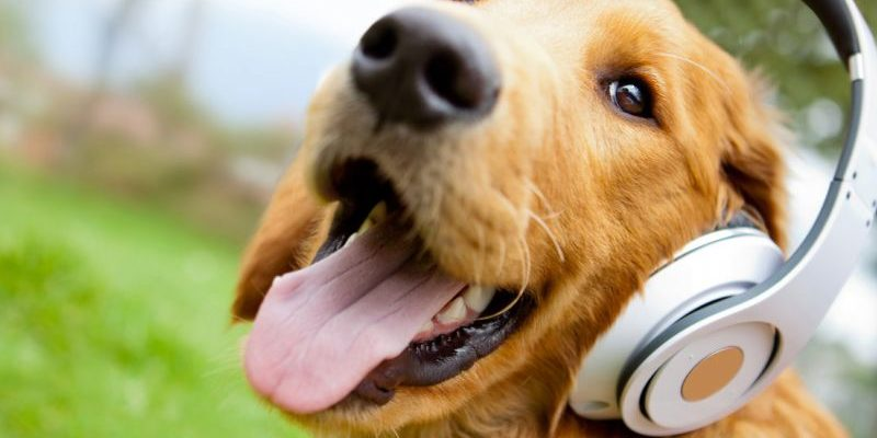 статусы про собак