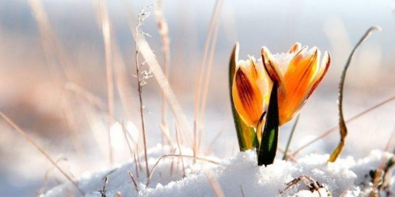 Прикольные и короткие поздравления с первым днём весны