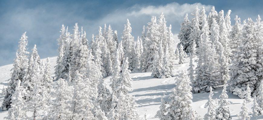 статусы про зимний лес