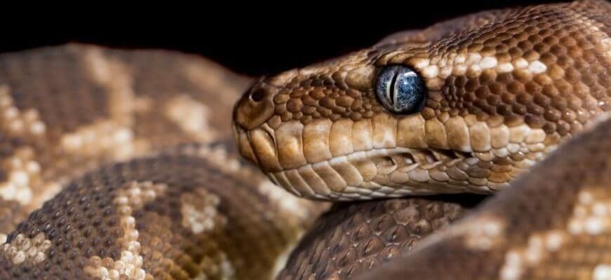 статусы про змею